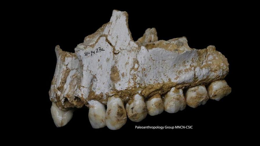 Неандертальцы пользовались антибиотиками и болеутоляющими средствами