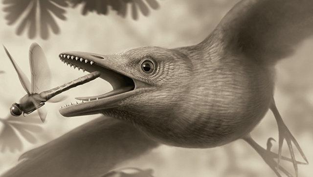 Палеонтологи выяснили, что первые птицы появились 120 млн. лет назад