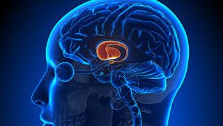 Ученые рассказали, почему у человека такой большой мозг