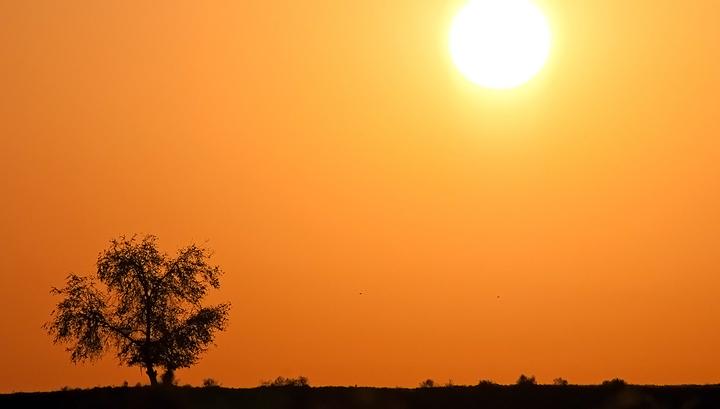 В Канаде от аномальной жары погибли 50 человек