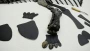 В Антарктиде найдено более тонны останков динозавров