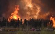 Лесные пожары в Канаде приостановили поставки нефти