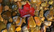 Канада готовит закон по борьбе с коррупцией в добывающем секторе