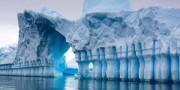 В акватории Антарктиды найдено неизвестное животное
