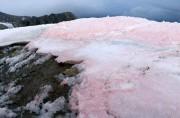 Красные водоросли ускоряют таяние ледников в Арктике