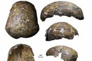 Археологи нашли череп человека возрастом 37 000 лет