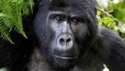 За 25 лет Земля потеряла около 10% дикой природы