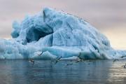 В Санкт-Петербурге проходит международный форум, посвященный проблемам Арктики