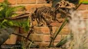 Ученые назвали самых крупных динозавров Средней Азии