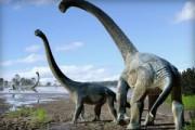 В Австралии нашли останки огромных динозавров
