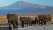 К 2020 году две трети животных могут исчезнуть