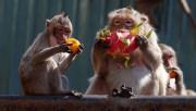 Ученые считают, что фрукты сделали из обезьяны человека