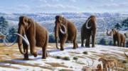 Найдена новая причина вымирания мамонтов