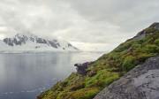 Антарктида к середине 21 века может стать зеленой