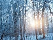 В канун Рождества  в Россию придут морозы