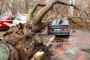 Ураган в Москве унёс жизни двух человек
