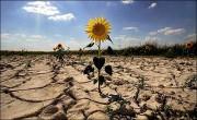 Из-за глобального потепления скоро исчезнут овощи